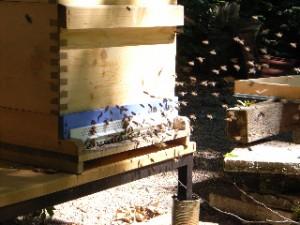 Bienenflug