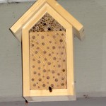 Mauerbienen am Bienenhotel (Foto: DoSchu)