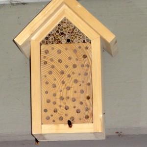 Mauerbienen am Bienenhotel