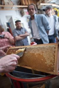 Entdeckelung von Honig-Wabe